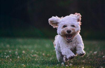 Pes a letné horúčavy. Ako mu pomôcť, aby to zvládol lepšie?